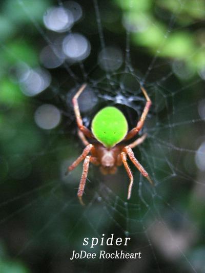 背中 の 蜘蛛